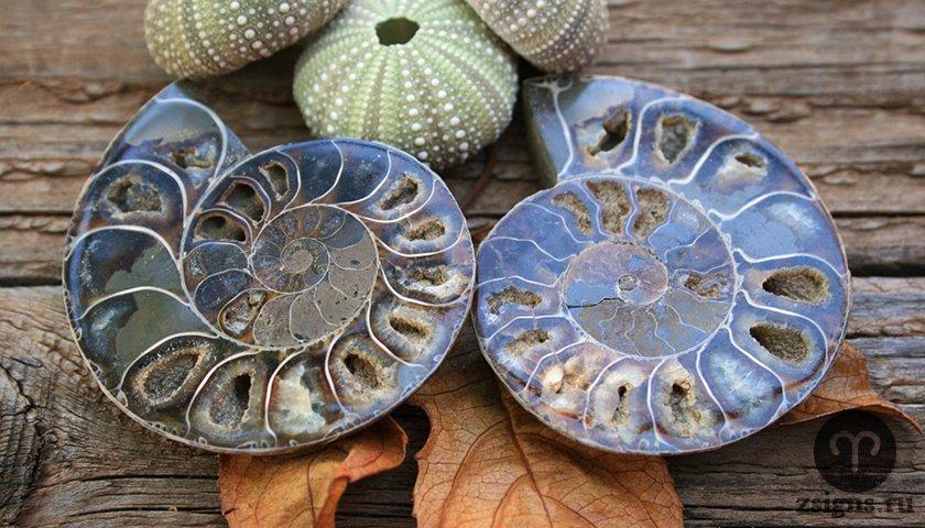 ammonit-kamen-magicheskie-svojstva-znak-zodiaka