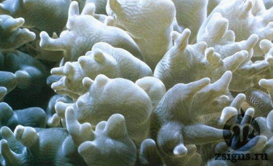 korall-v-prirode